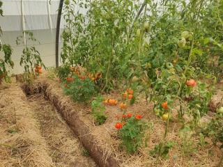 Food production from sustainable agriculture