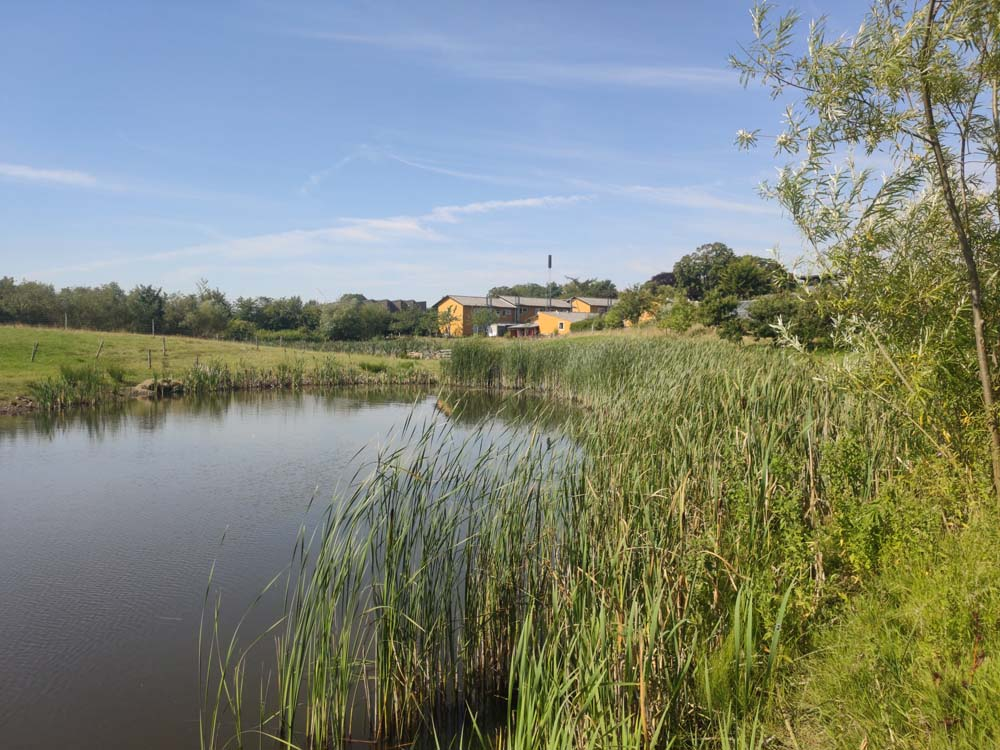 Pond Hjortshoj