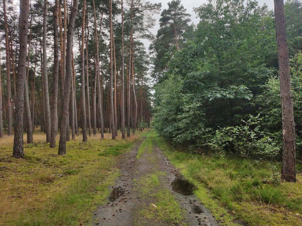 Forêts contrastées Sieben Linden