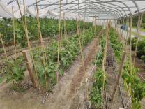 Greenhouse Sieben Linden
