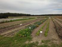 Community garden Sieben Linden