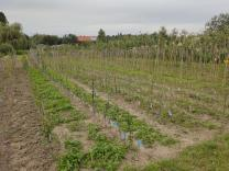 Tree nursery Sieben Linden